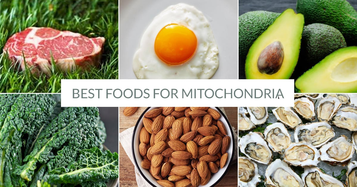The Best Foods For Mitochondria Health - Irena Macri | Food Fit For Life