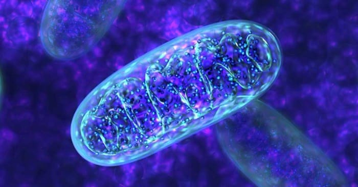 Foods for mitochondria