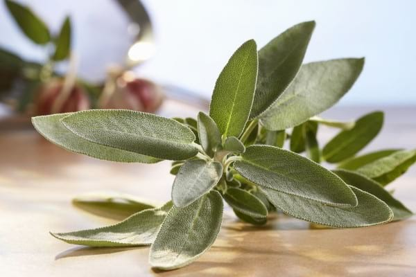 Sage - Herbs & Spices With Most Benefits