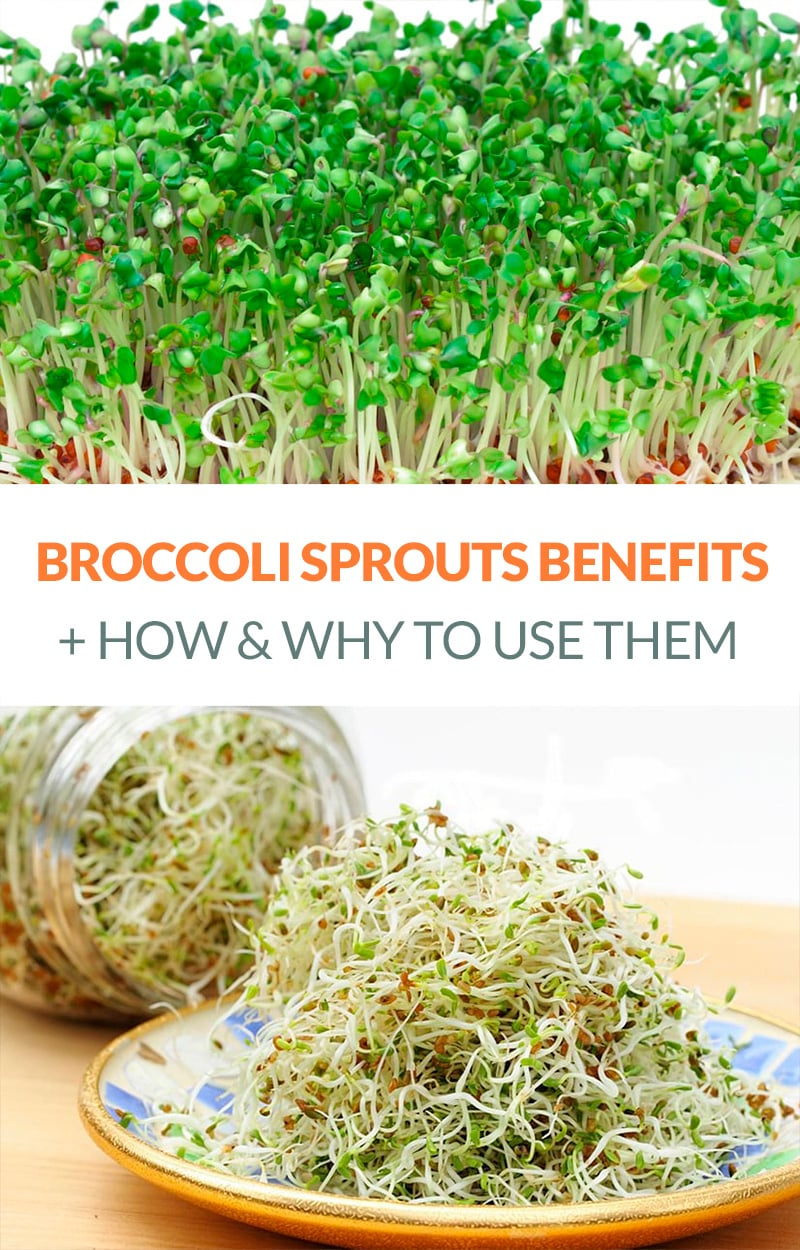 Broccoli Sprouts Benefits & How To Use Them