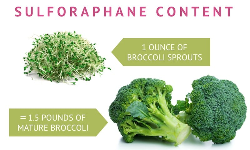 Sulforaphane broccoli sprouts content