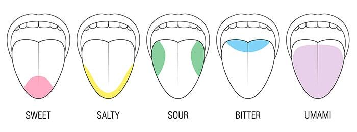 Taste receptors and five basic tastes: salty, bitter, sweet, sour and umami
