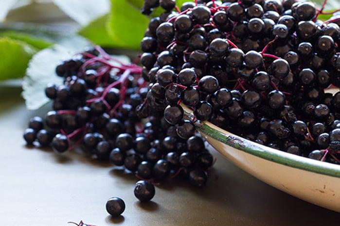 Elderberry benefits for immune function