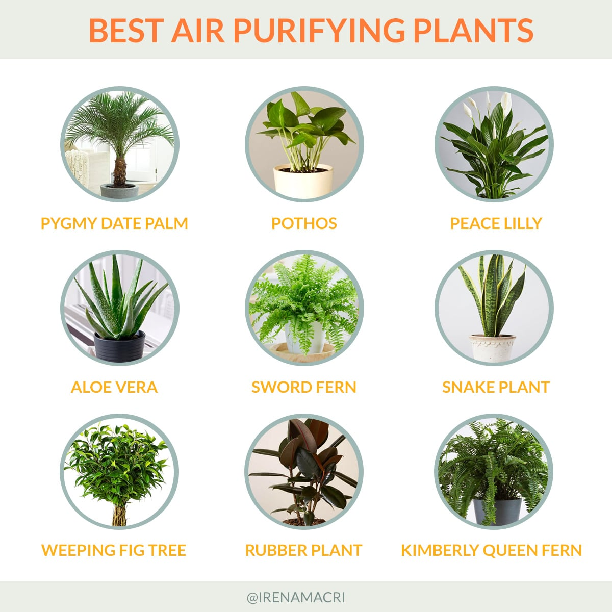 Best air purifying plant for your home office