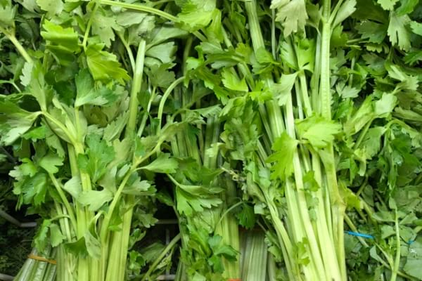 What is chinese celery?