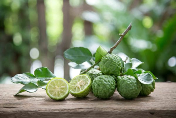 kaffir-lime-leaves